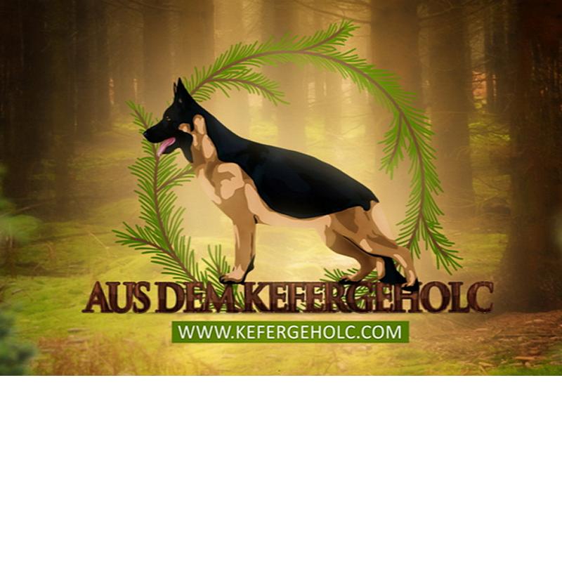 Розплідник собак AUS DEM KEFERGEHOLC фото