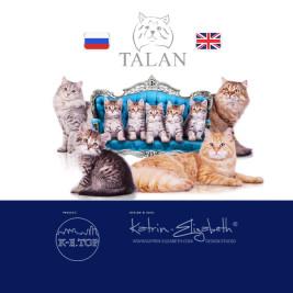 питомник сибирских кошек