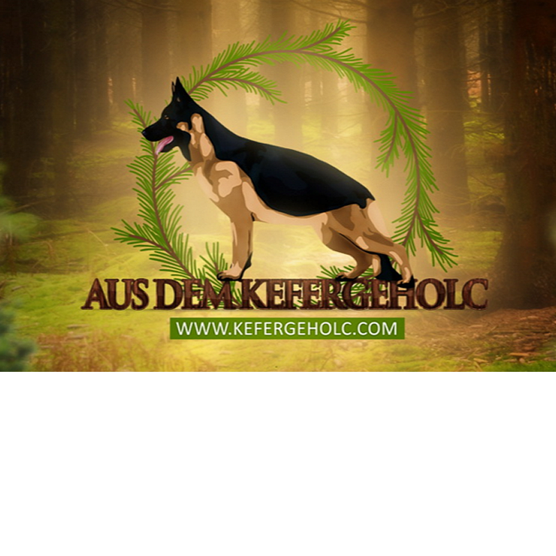 Kennel AUS DEM KEFERGEHOLC photo