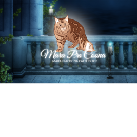 питомник кошек Mara Pra Coona