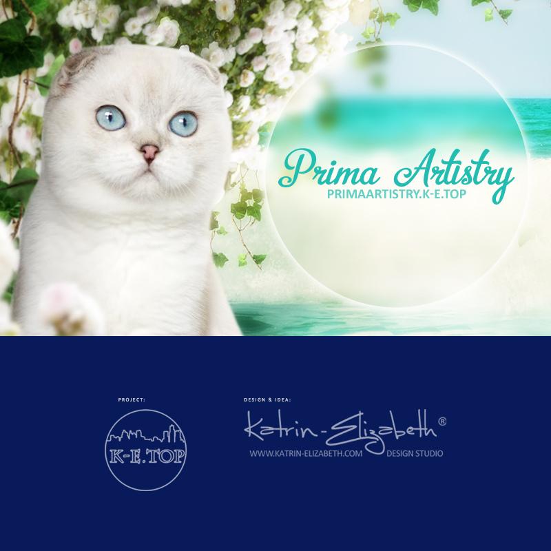 питомник кошек Prima Artistry