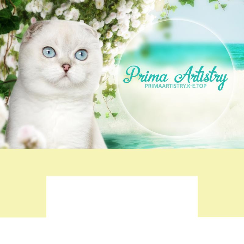 розплідник шотландських кішок Prima Artistry