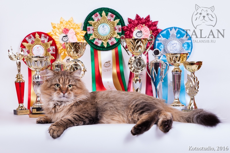 The first World Champion in cattery Talan!