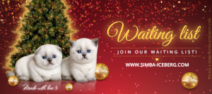 News 07.02.2017 from cattery SIMBA ICEBERG