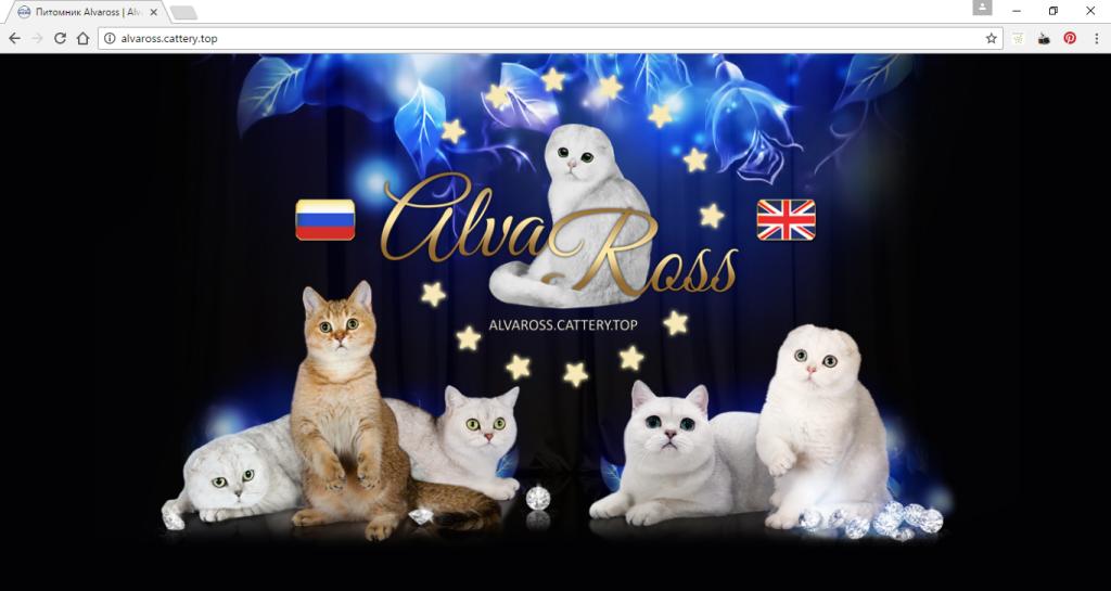 дополнительная страница входа (обложка) на сайт питомника кошек
