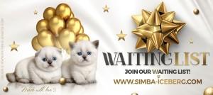 Новина 18.02.2017 від розплідника SIMBA ICEBERG