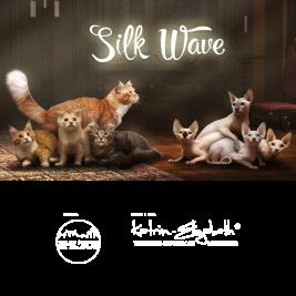 питомник кошек Silk Wave