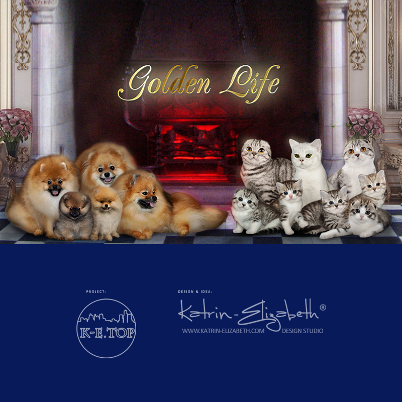 Golden Life Cattery & Kennel
