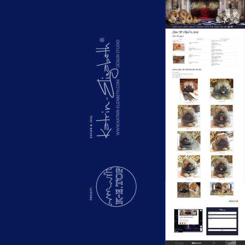 order cattery kennel website (7)