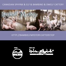 pitomnik koshek Bambielf Mystery