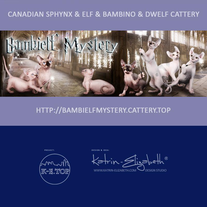 питомник кошек Bambielf Mystery