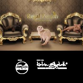 питомник кошек Regal Person