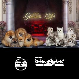 питомник кошек и собак Golden Life