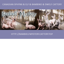 Розплідник кішок Bambielf Mystery