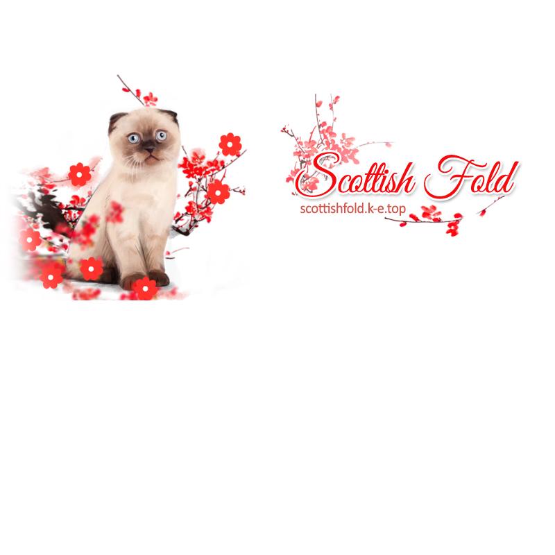 фото каталог розплідників кішок scottishfold.k-e.top