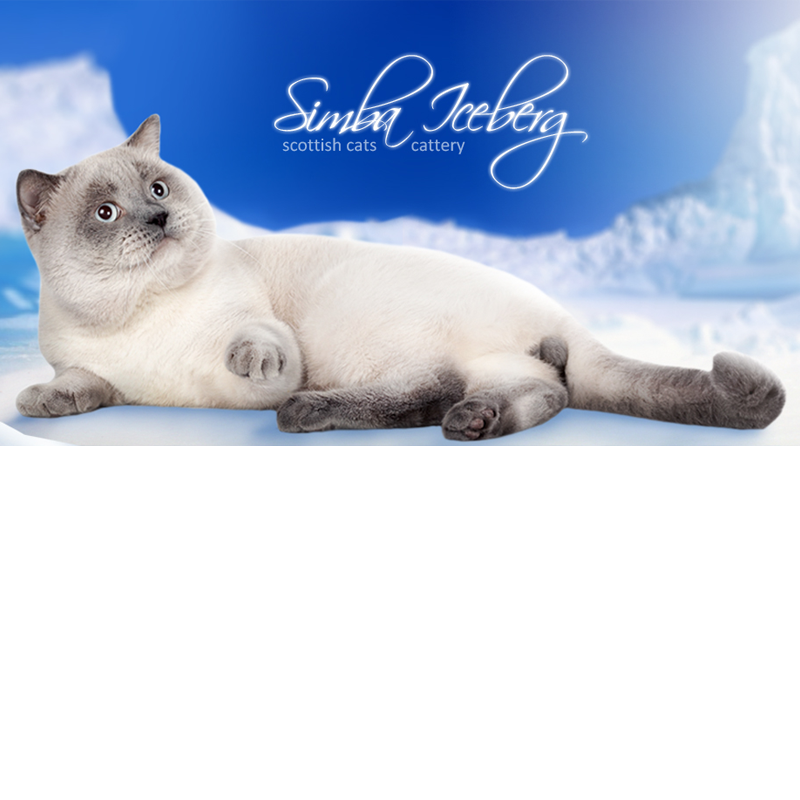 питомник кошек Simba Iceberg