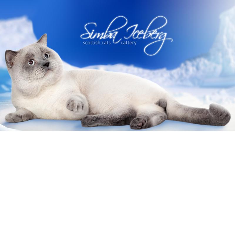 розплідник кішок Simba Iceberg