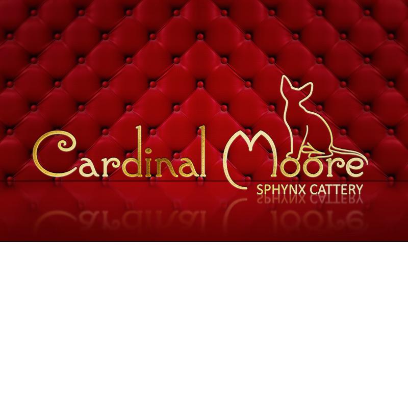 Питомник кошек Cardinal Moore