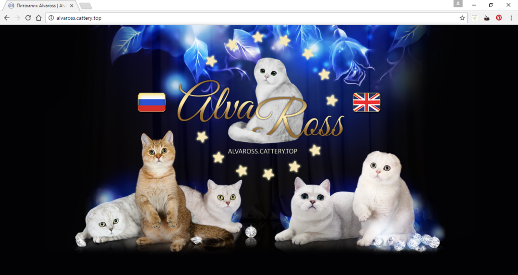 Additional entry page (cover) for cattery website